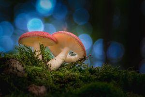 """Twee kleine """"roodkapjes"""" in het donkere bos"""