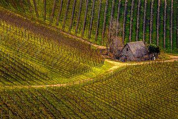 Durbacher Wijn, Herfst editie van Pascal Sunday
