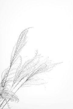 Blühendes Gras in Schwarz-Weiß von What I C