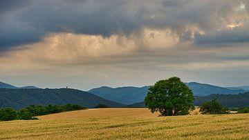 Dramatischer Himmel über Kornfeld von WittholmPhotography