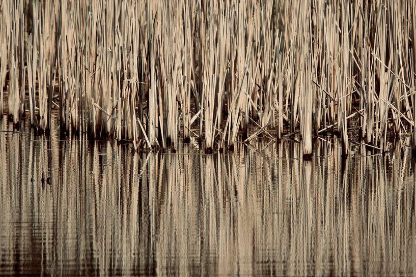 Oneindigheid van Sven Zoeteman