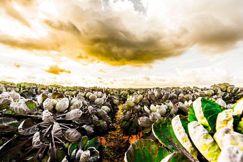 Spruiten van Maurice B Kloots      www.Fototrends.nl