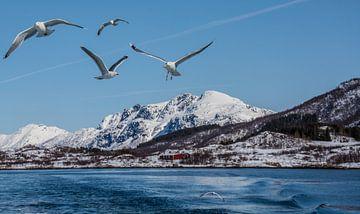 Seagulls in the Arctic von Ilse Hofman