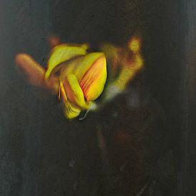 juste une fleur sur Dick Jeukens