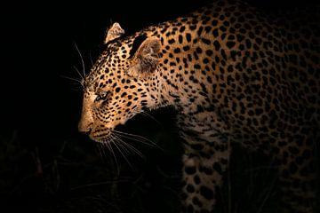 Leopard Silhouette  van Thomas Froemmel