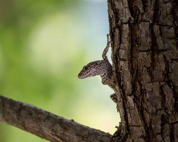 close-up van een hagedis op een boom van