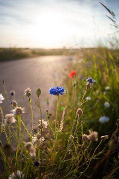 Strijklicht met de laatste bloeiende veldbloemen van het voorjaar. van Fotografiecor .nl