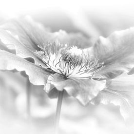 clematis in zwart/wit van Yvonne Blokland