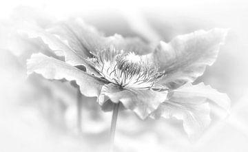 clematis in zwart/wit van