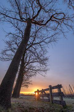 Boerenhek bij bomen von Moetwil en van Dijk - Fotografie