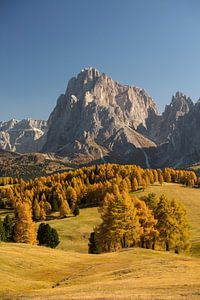 Goldener Herbst auf der Seiser Alm in Südtirol.