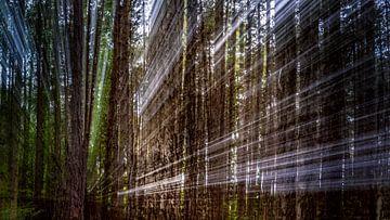 Stralend bos van Cathy Roels