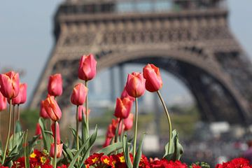 Parijs von Wesley Vriesde