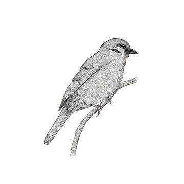 A bird named Johan von Charlotte Hartong