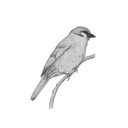 A bird named Johan van