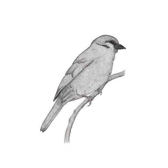 A bird named Johan