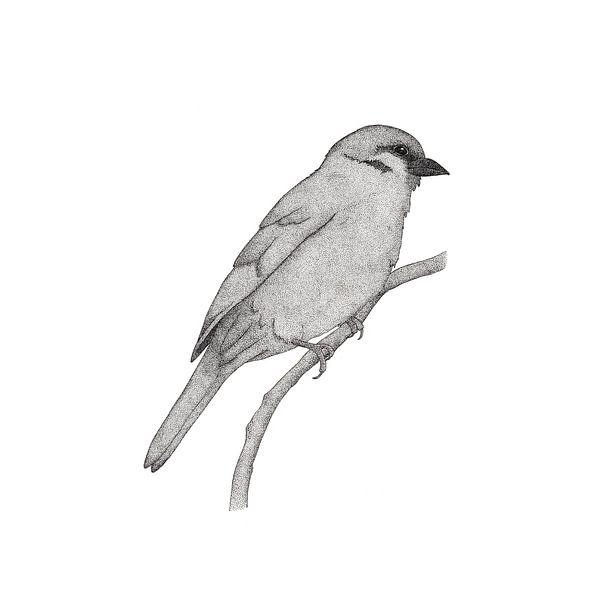 A bird named Johan van Charlotte Hartong