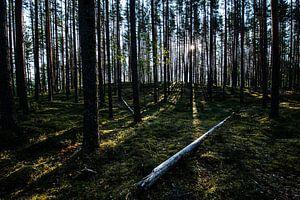 Diep in het bos / Deep in the woods