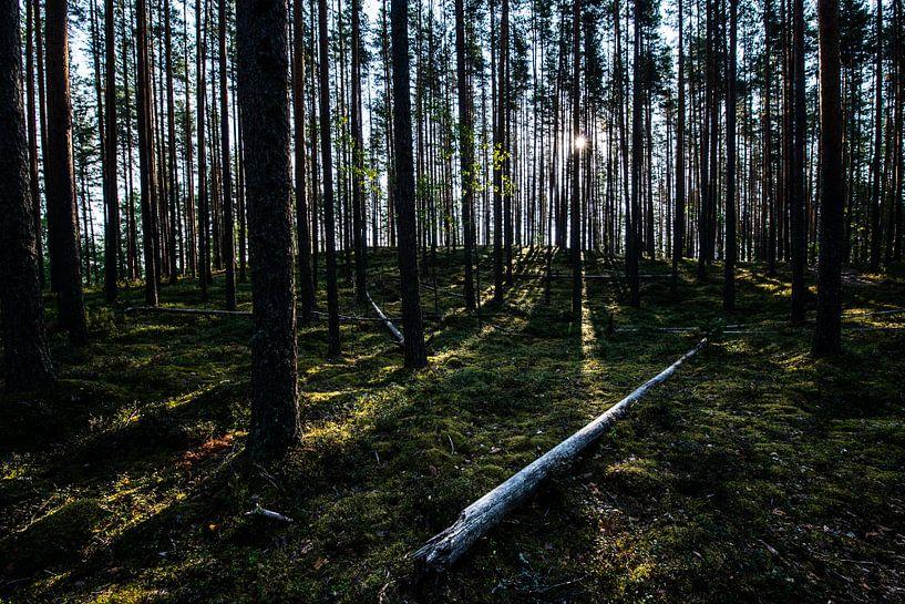 Diep in het bos / Deep in the woods van Ellis Peeters