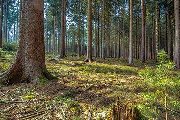 Der Wald im Winter 2020 von Johnny Flash