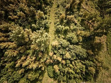 Bos van Van Renselaar Fotografie