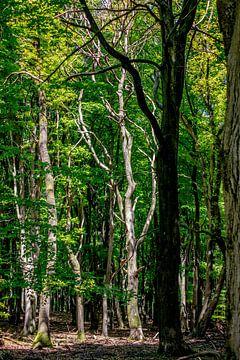 Een zeer gave dode boom in een bos