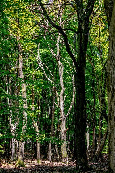 Een zeer gave dode boom in een bos van Thomas Winters