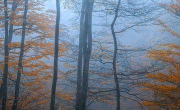 L'automne bleu sur Joris Pannemans - Loris Photography