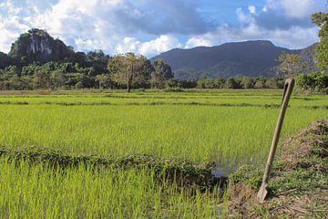 Riesige Reisfelder in Asien von Robin Jongerden