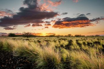 Lavavaveld zonsondergang van road to aloha