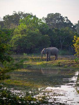 Elefant im Yala-Nationalpark, Sri Lanka von Teun Janssen
