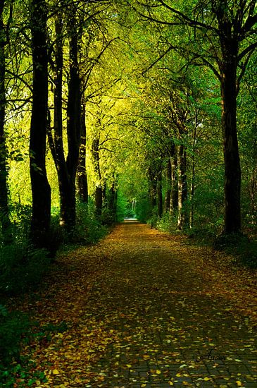 Jahreszeiten - Herbst