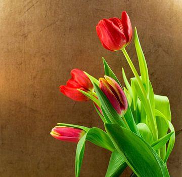 rode tulpen en goudkleurige achtergrond von Compuinfoto .