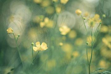 Blumen Teil 135 von Tania Perneel