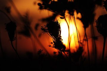 Silhouettes van KaHoo Wong