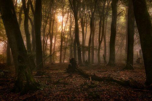 Het bos van de dansende bomen van