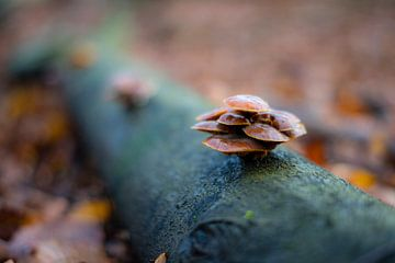 Paddestoelen in het bos van Jack Vermeulen