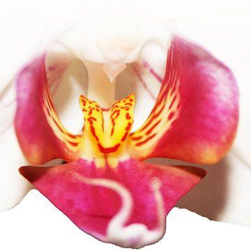 Orchidee von Kim van Erp