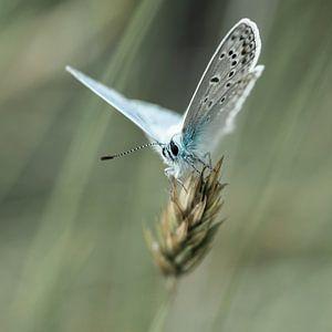zomerblauw