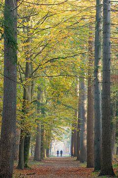 Spaziergang auf der Allee ohne Ende Zeist von Peter Haastrecht, van