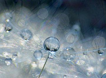 Blue Joy (Paardenbloempluis met  schitterende druppels) van Caroline Lichthart