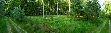 Panorama Hoge Veluwe 70080010027 fotograaf Fred Roest van Fred Roest