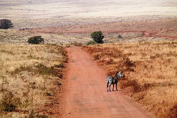 Zebra in Ngorongoro NP in Tanzania  van Tineke Mols