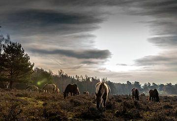 Pferde auf der Plantage Willem III von Jacques Jullens