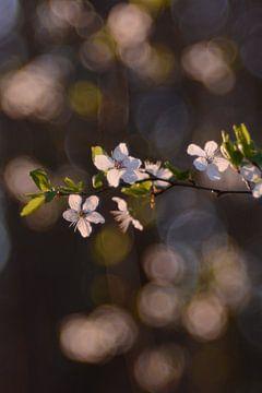 Frühlingserwachen von Susanne Deinhardt