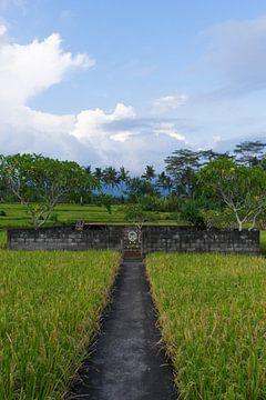 Kleine tempel in het rijstveld van Martijn Stoppels