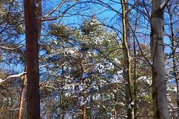 Wintertijd van Thomas Jäger