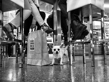 Straßenhund zwischen Barhockern von Fokko Muller