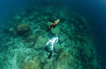Eén met een zeeleeuw van Joost van Uffelen