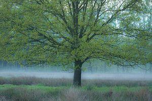 Nebel unter der Eiche von Geert Brosens